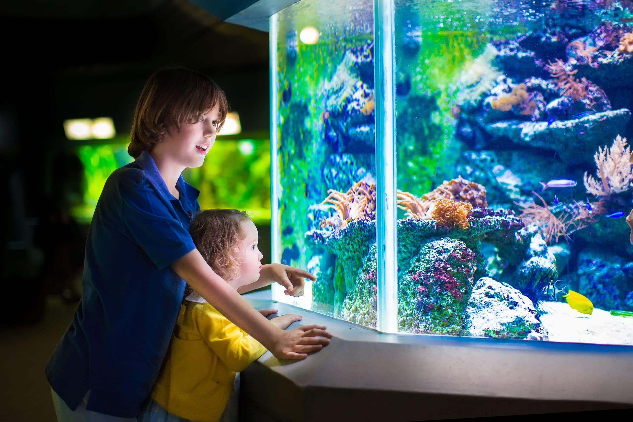 水槽を覗き込む2人の少年